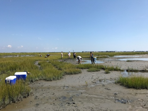 The remote sensing and mosquito team working together in the salt marsh