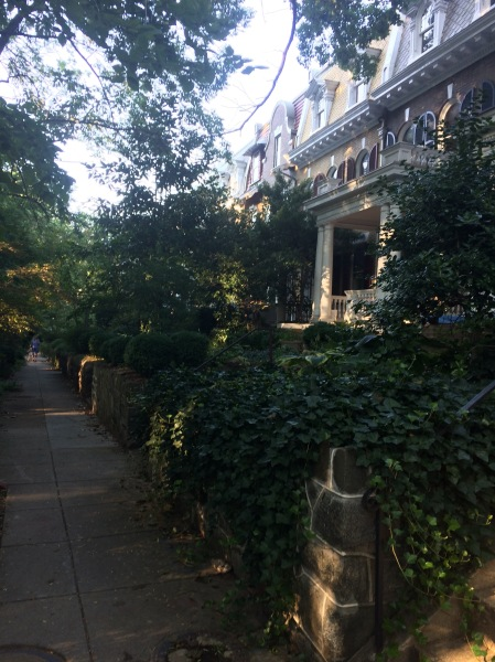 Front yards in DC