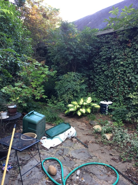 Backyard with a BGS trap