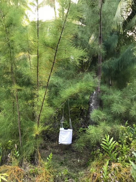 The traps are suspended above the ground to keep them away from rodents and to stop ants from stealing captured mosquitoes